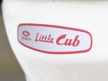 Little-cub